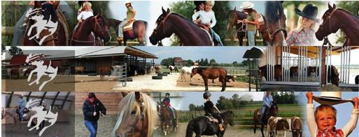 Collage Reiten Kühl