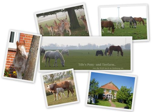 Collage Ponyfarm